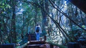 Frauentourist genießen Trekking im üppigen Naturwaldsonnenlicht lizenzfreie stockfotos