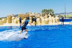 Frauentrainerschwimmen mit Delphinen Stockfotos