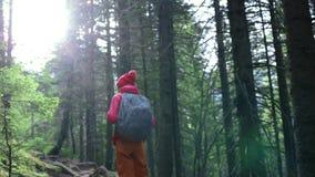 Frauenwanderer mit Rucksack, tragend in der roten Jacke und orange in den Hosen und gehen in den Wald in den Bergen stock footage