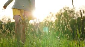 Frauenweg auf grünem Feld im tiefen Gras stock video