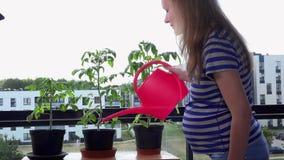 Frauwasserpflanzeblumen der schwangeren Frau mit Gießkanne im flachen Hausbalkon stock video