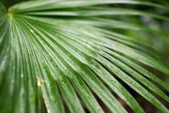 Frawn da palma Foto de Stock Royalty Free