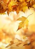 Färben Sie Herbstblätter gelb Stockfotos