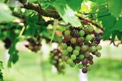 - - Früchte gesetzt auf braunes Heu Lizenzfreies Stockbild