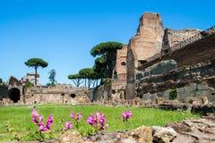 Fördärvar av stadion på den Palatine kullen i Rome, Italien Royaltyfria Bilder