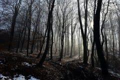fördunkla skogen Fotografering för Bildbyråer
