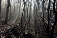 fördunkla skogen Royaltyfri Foto