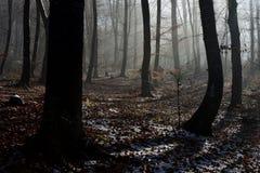 fördunkla skogen Royaltyfria Foton