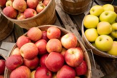 Apples Fresh Picked in a Bushel BASKET fresh food produce. Freah food produce apples in a bushel basket at the market royalty free stock photography