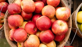 AppleS Fresh Picked in a Bushel BASKET fresh food produce. Fresh food produce apples in a bushel basket at the market royalty free stock photo