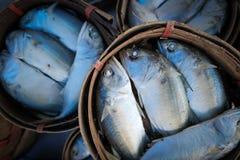 Freah makrillförsäljning i korg Arkivfoton