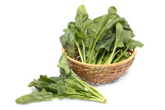 Freah spinach in the basket Royalty Free Stock Image