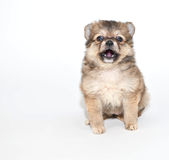 Freaked Out! Royalty Free Stock Images