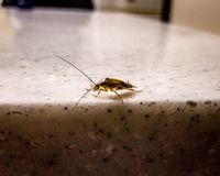 Freaking таракан стоковые фотографии rf