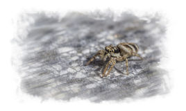 A freaky little spider in big Royalty Free Stock Image