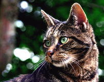 Freaky my cat. Picture of my cat taken with the cannon EOS300D Rebel Royalty Free Stock Photos