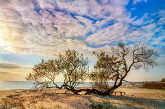 Freaky writhing trees on the beach in the sand Stock Image