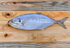 Freas indian mackerel for cooking. Fresh indian mackerel fish for cooking from asian fishery market Stock Images