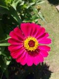 Freash blommar i morgonen Royaltyfria Foton