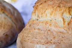 Freash bread Stock Images