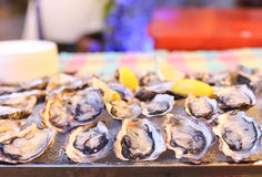 Freash oysters on ice tray and lemon Royalty Free Stock Photography