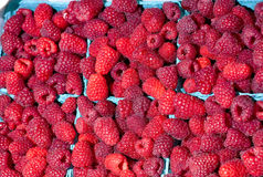 Freash Red Raspberries in survung baskets Royalty Free Stock Photos