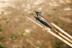 Frecce avvelenate Immagini Stock Libere da Diritti