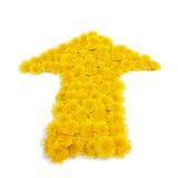 Freccia del fiore Fotografia Stock