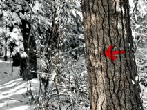 Freccia dell'indicatore della traccia di escursione del parco di stato di Burr Pond Fotografia Stock