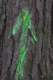 Freccia verde sul tronco di albero Fotografie Stock Libere da Diritti