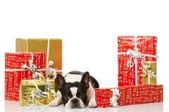 Frechbuldog met Kerstmisdecoratie Royalty-vrije Stock Fotografie