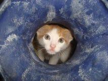 Freche Katze lizenzfreie stockbilder