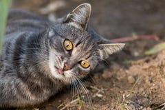 Freche Katze mit seiner Zunge, die heraus aus den Grund liegt lizenzfreies stockfoto