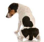Frecher Hund stockfoto