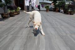 Frecher Hund Stockfotos