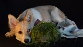 Frecher Hund aß das Gras Selektiver Fokus stock video footage