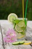 Freches Wasser in einem Glas Lizenzfreie Stockfotografie