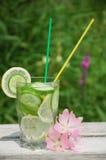 Freches Wasser in einem Glas Stockfoto