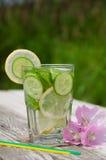 Freches Wasser in einem Glas Stockbilder