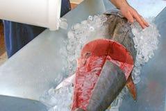 Frechtonfiskdetaljen arkivbilder