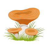 Freckle, edible forest mushrooms. Colorful cartoon illustration Royalty Free Stock Photo