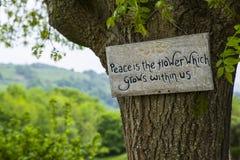 Fred är blomman som växer inom oss arkivfoton
