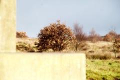 Fred är en försiktig bris till och med träden fotografering för bildbyråer