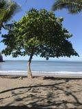 Fred av havet royaltyfria foton