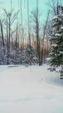 Fred i snön Arkivfoton