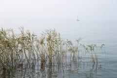 Fred och lugn av sjön Arkivfoton