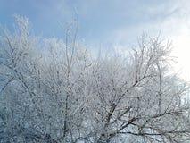 freddo fotografie stock