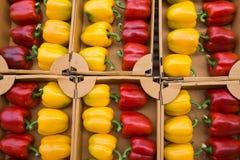 Freddo giallo e rosso Fotografie Stock