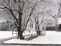 Freddo, Snowy, scena di inverno Fotografie Stock