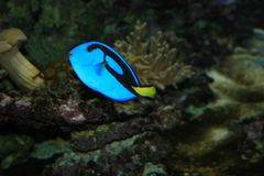 Fredom of the small blue fish Royalty Free Stock Photos